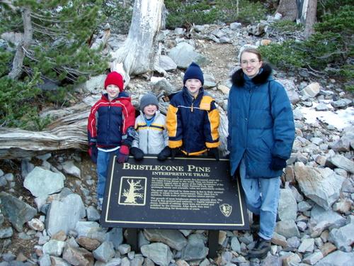 Bristlecone Pine Interpretive Site